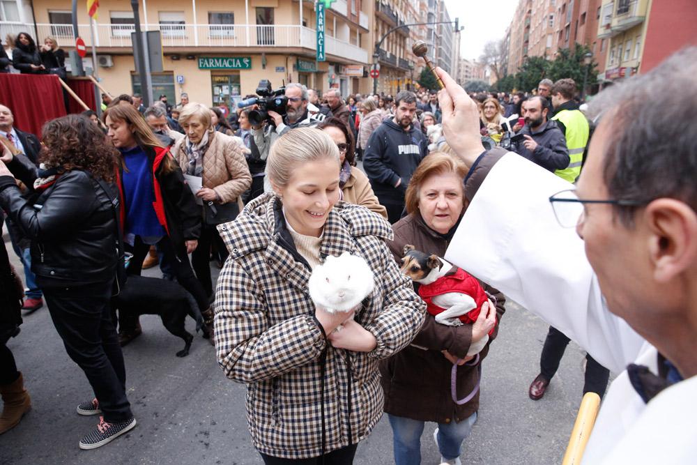 Bendiciones de animales:  también ellos dan gloria a Dios Se suceden las celebraciones tras sant Antoni del 'porquet'